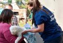 Retoman los operativos barriales de Salud Animal: castración y vacunación